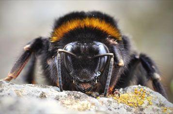 Der findes forskellige former for bier