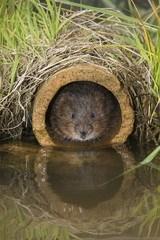 karbid mod rotter