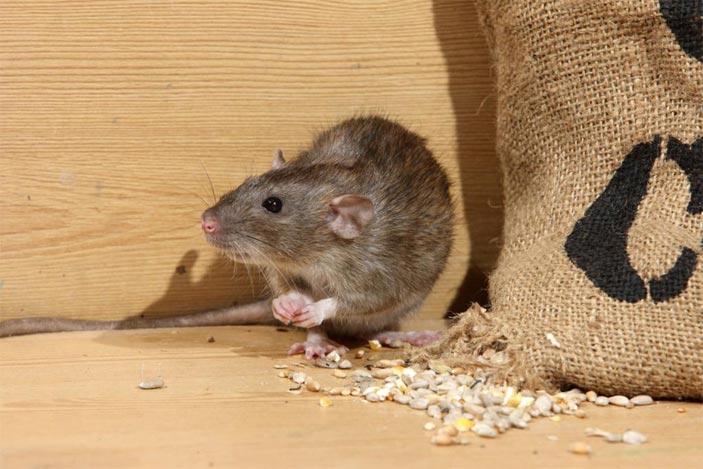 rotter spiser alt